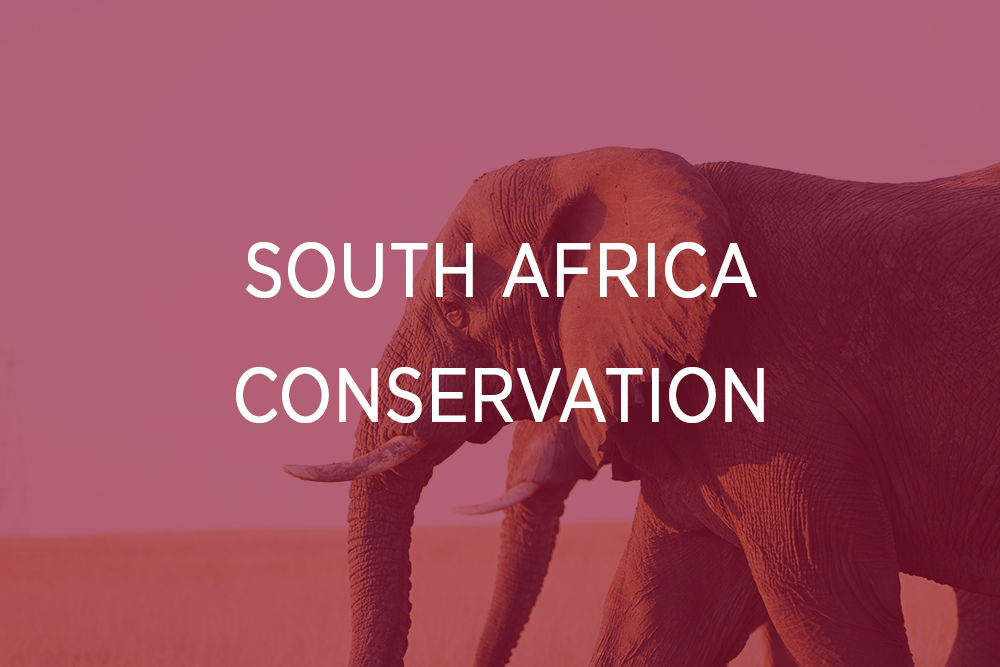 South Africa - Conservation